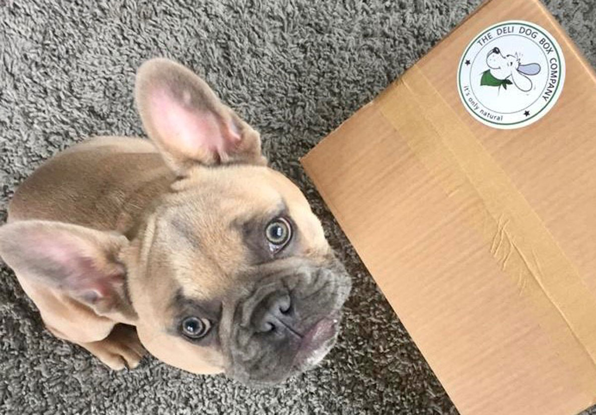 Variety Treat Box for Small Dogs